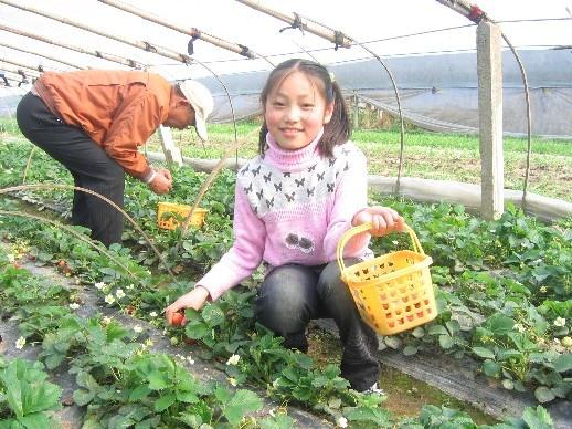 摘草莓 (图),作文,新学网