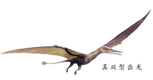 恐龙的种类