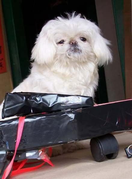 流浪狗图片-一条流浪狗的前世今生,感动故事