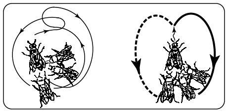 《初中备课之谜》管理数学,教学,动物游戏,说课资料有关反思教案图片